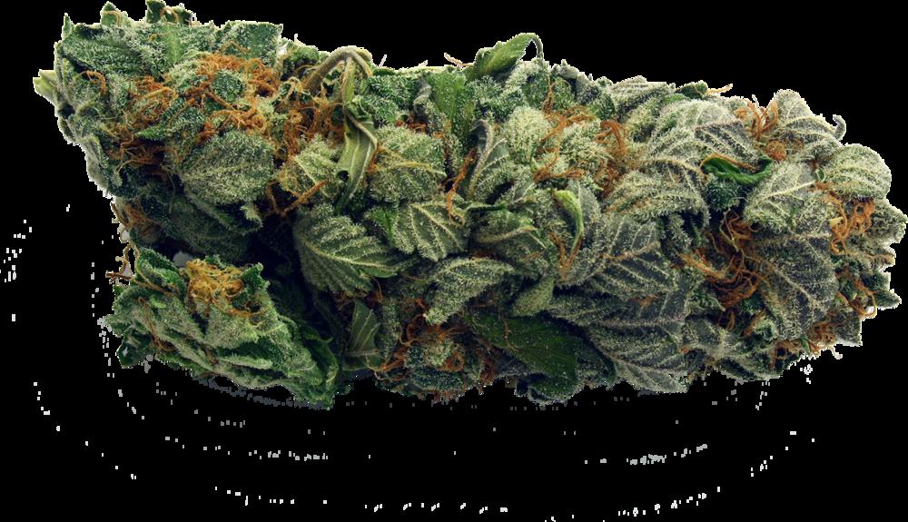 Cannabis Dispensary Edmonton